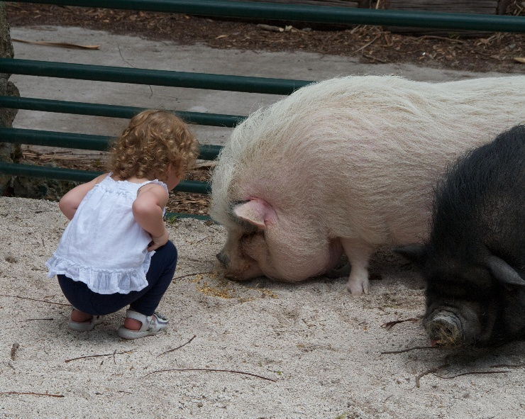Baby with Pigs